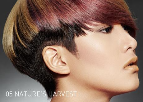 Centro Hair Salon - Hair Treatment